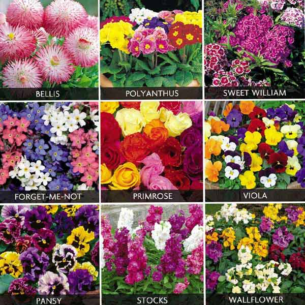 Bedding Plants Sale Fast Delivery Greenfingerscom