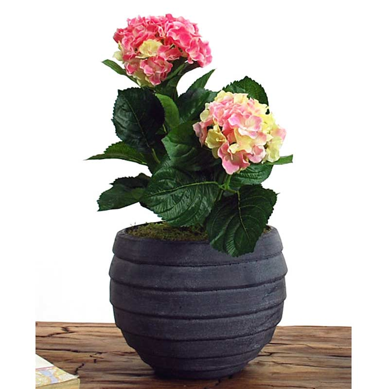Artificial pink potted hydrangea in grey bowl on sale fast delivery - Nature curiosity stressed out plants emit animal like signals ...