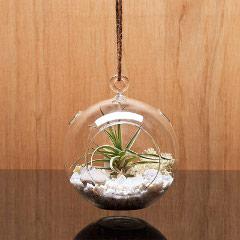 Urban Botanist Bauble Terrarium