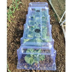 Thompson and Morgan Mini Greenhouse Cloche - Twin Pack