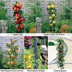 Fruit Collection - Apples, Pear, Plum, Cherry - 5 Pots