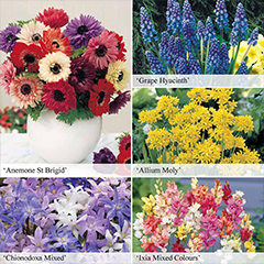 Thompson and Morgan Bumper Spring Flowering Bulb Collection - 425 Bulbs