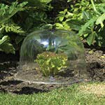 Botanico Dome Cloche