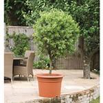 Cilindro Planter - 50cm