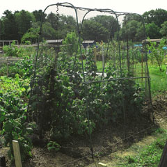 Gardman Walk-in Crop Cage