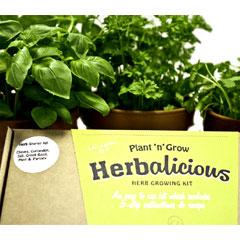 Plant n Grow Herb Starter Kit