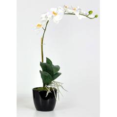 Artificial White Orchid Phalaenopsis Plant in Black Ceramic Pot - 1 Stem