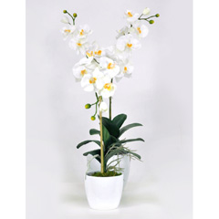 Artificial White Orchid Phalaenopsis Plant in White Ceramic Pots - 2 Stems
