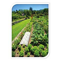 Terra Plant Protection Fleece - 1.5 x 5m