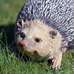 Hedgehog Garden Ornament - 20.5cm