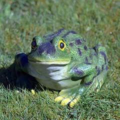 Design Toscano Ribbit The Frog Garden Statue