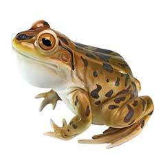 Design Tocano Leopard Frog Statue - 27cm Width