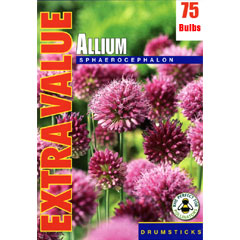 Taylors Autumn Bulbs Allium Sphaerocephalon Extra Value Pack - 75 bulbs