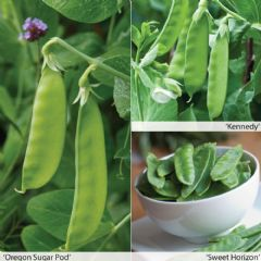 Vegetable Seeds Peas All Season Collection - 160 Seeds