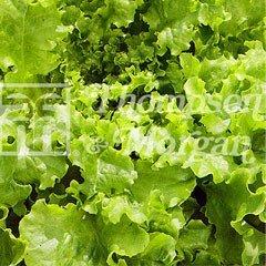 Vegetable Seeds - Lettuce Salad Bowl