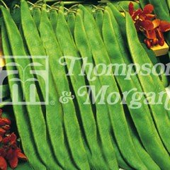 Vegetable Seeds - Runner Bean Lady Di