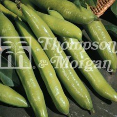Vegetable Seeds - Broad Bean Aquadulce Claudia