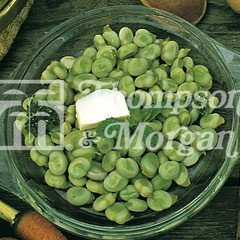 Vegetable Seeds - Broad Bean Express