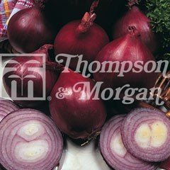 Vegetable Seeds - Onion Red Baron F1 Hybrid