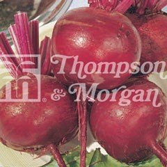 Vegetable Seeds - Detroit 2 Crimson Globe Beetroot