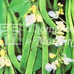 Vegetable Seeds - Runner Bean White Lady