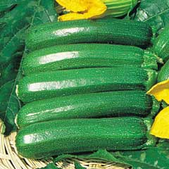 Thompson & Morgan Courgette Defender 5 Jumbo Plugs