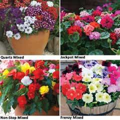 Thompson & Morgan PP - Garden Ready Container Collection 120 Plants