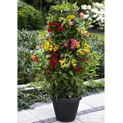 Thompson & Morgan Alstroemeria Everest Tower Kit with 3 Potted Plants