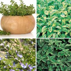 Thompson and Morgan BBQ Herb Collection  4 x 1 Litre Pots