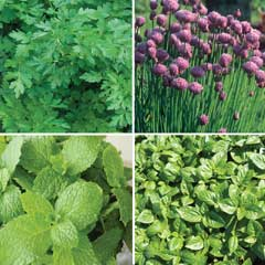 Thompson and Morgan Herb Kitchen Collection 4 x 1 Litre Pots