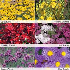 Thompson & Morgan Colour Perennials Collection 12 x 50mm Plugs