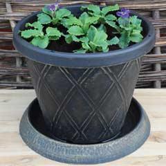 Thompson & Morgan Large Patio Pot & Saucer x 3