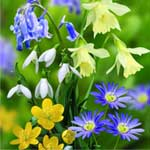 Autumn Bulbs - Woodland Collection
