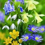 Autumn Bulbs - Woodland Collection