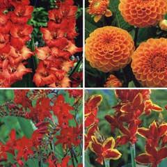 Spring Bulbs - Summer Collection 20 Bulbs
