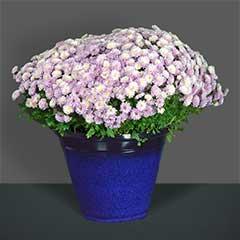 Apta Glaze Lite Cone Plant Pot 35cm diameter