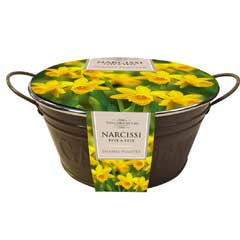 Taylors Metal Embossed Garden Bowl - Narcissi Tete a Tete Bulbs x 9