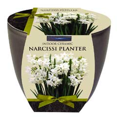 Taylors Indoor Narcissi Planter - Narcissus Paperwhite Bulb x 1