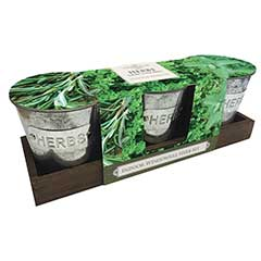 Taylors Indoor Windowsill Herb Kit