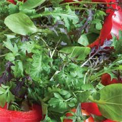 Thompson & Morgan Salad Leaves Speedy Mix Seed Tape